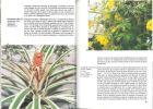 EncyclopÃdie des plantes d'intÃrieur.. Skalicka, Anna