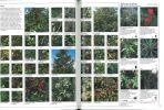 Grande encyclopÃdie des plantes & fleurs de jardin.. Brickell, C. et al.