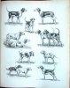 Animaux de vÃnerie et chasse aux chiens courants. 2 volomus.. Oberthur, Joseph