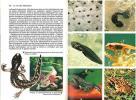 L'univers inconnu des batraciens et des reptiles en couleurs.. Ubertazzi, Tanara Milli