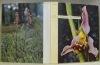Nos Orchidées. Europe occidentale et centrale. Traduction Marcel Marthaler.. DANESCH, Othmar et Edeltraud.
