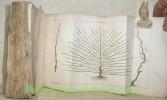 Traité de la culture des arbres fruitiers, Contenant une nouvelle manière de les tailler, et une méthode particulière de guérir les maladies qui ...
