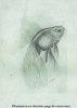 LE TÉLESCOPE – ÉLEVAGE - REPRODUCTION – HYGIÈNE. Les poissons exotiques, première série. Imprimerie Pairault, Paris, 1915.. LEFEBVRE L. Préface ...