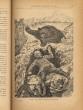 Bruin ou les jeunes chasseurs d'ours. Adaptation de Lucien DEMAY.. MAYNE-REID (Capitaine).