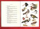 Petit Atlas Des Oiseaux . Fascicule  IV - Bécasseaux , Goélands , Canards , Hérons , Impennes , Ratites . DELAPCHIER L.