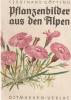 Planzenbilder aus den Alpen. Ferdinand Gotting